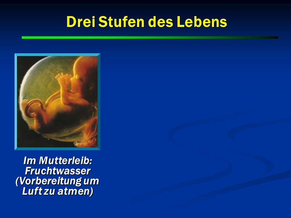 Im Mutterleib: Fruchtwasser (Vorbereitung um Luft zu atmen) Drei Stufen des Lebens