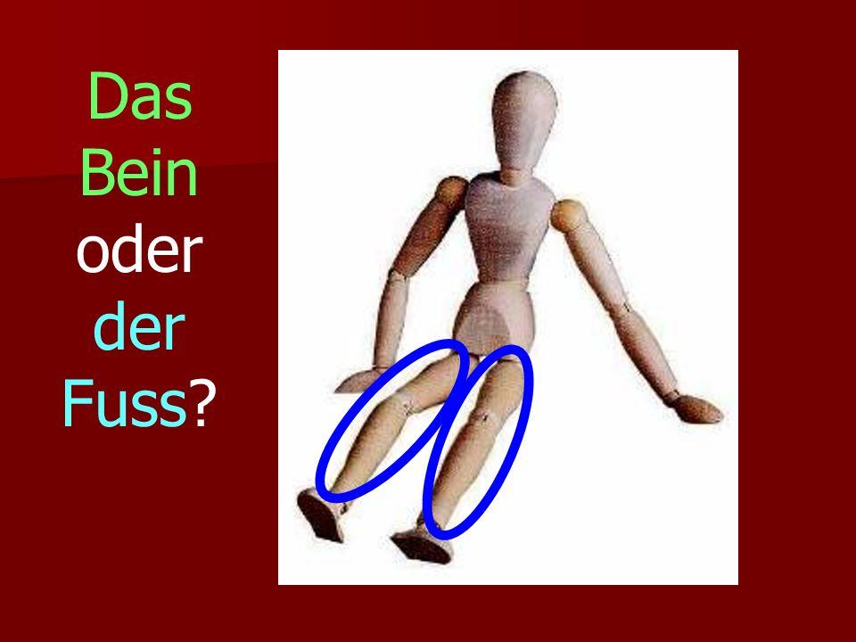Das Bein oder der Fuss?