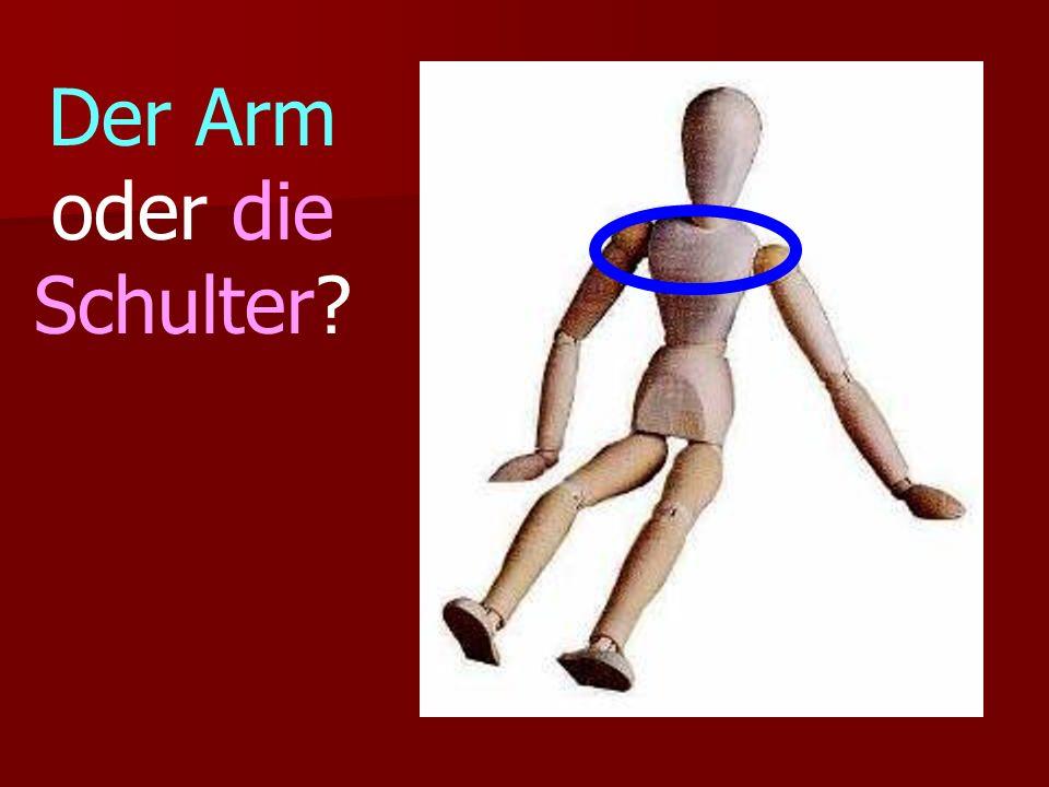 Der Arm oder die Schulter?