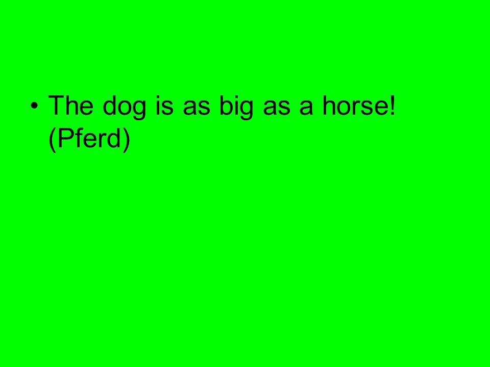 The dog is as big as a horse! (Pferd)