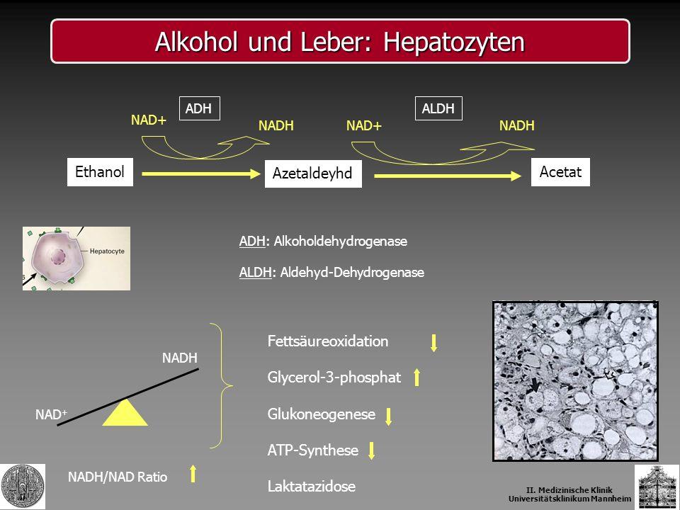 Alkohol und Leber: Hepatozyten Azetaldeyhd AcetatEthanol NAD+ NADH ADHALDH NADH NAD + Fettsäureoxidation Glycerol-3-phosphat Glukoneogenese ATP-Synthe