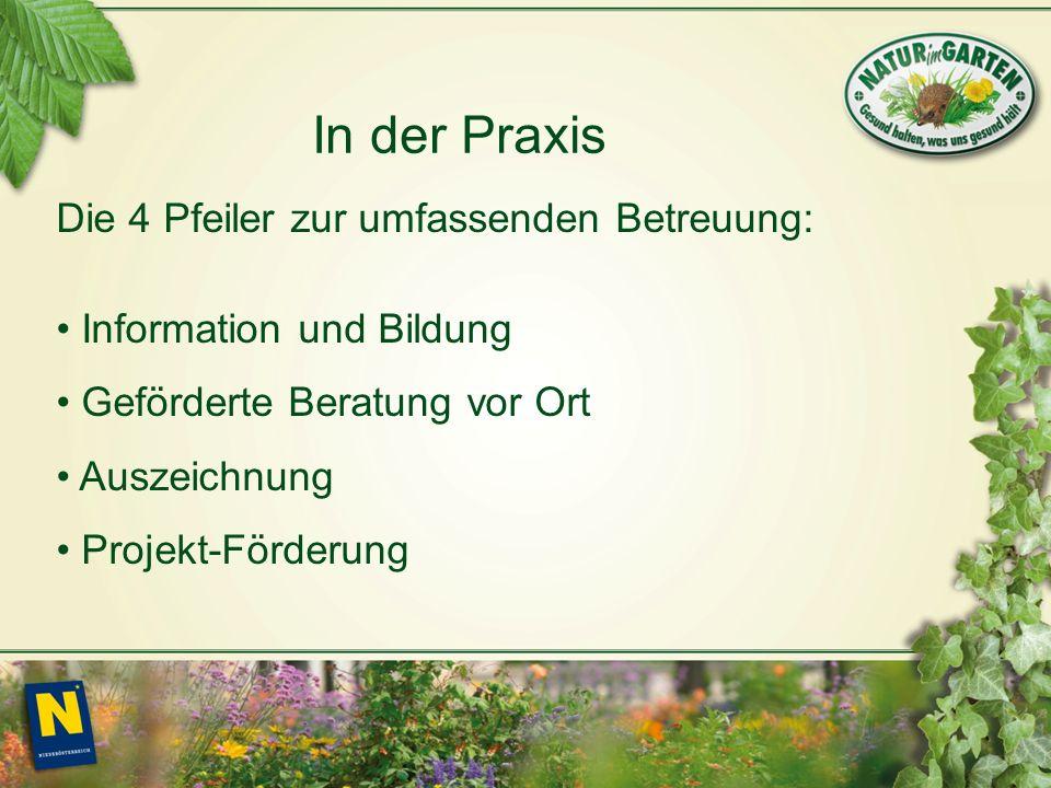 In der Praxis Die 4 Pfeiler zur umfassenden Betreuung: Information und Bildung Geförderte Beratung vor Ort Auszeichnung Projekt-Förderung