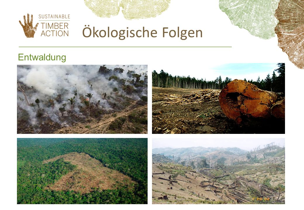 EU responsibilities in illegality 2003, EU15: import 82,24 Mm 3 of illegal timber (~ 20%) (EC and WWF UK, 2004) (country data can be provided):