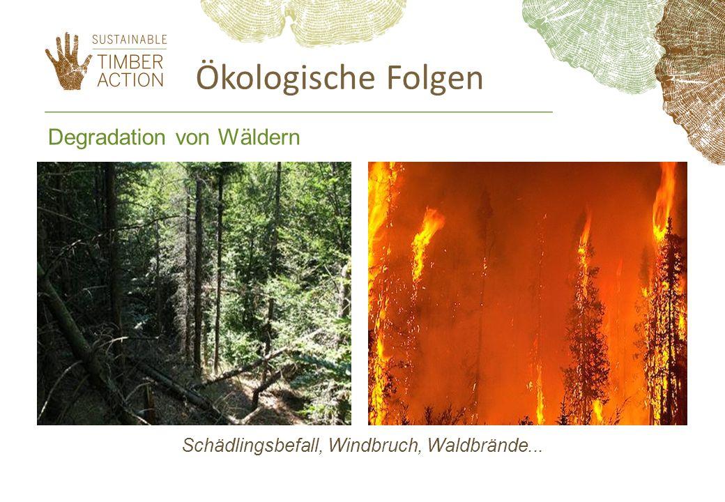 Fairer Handel und die Holzbranche: Rund 10 Mio.