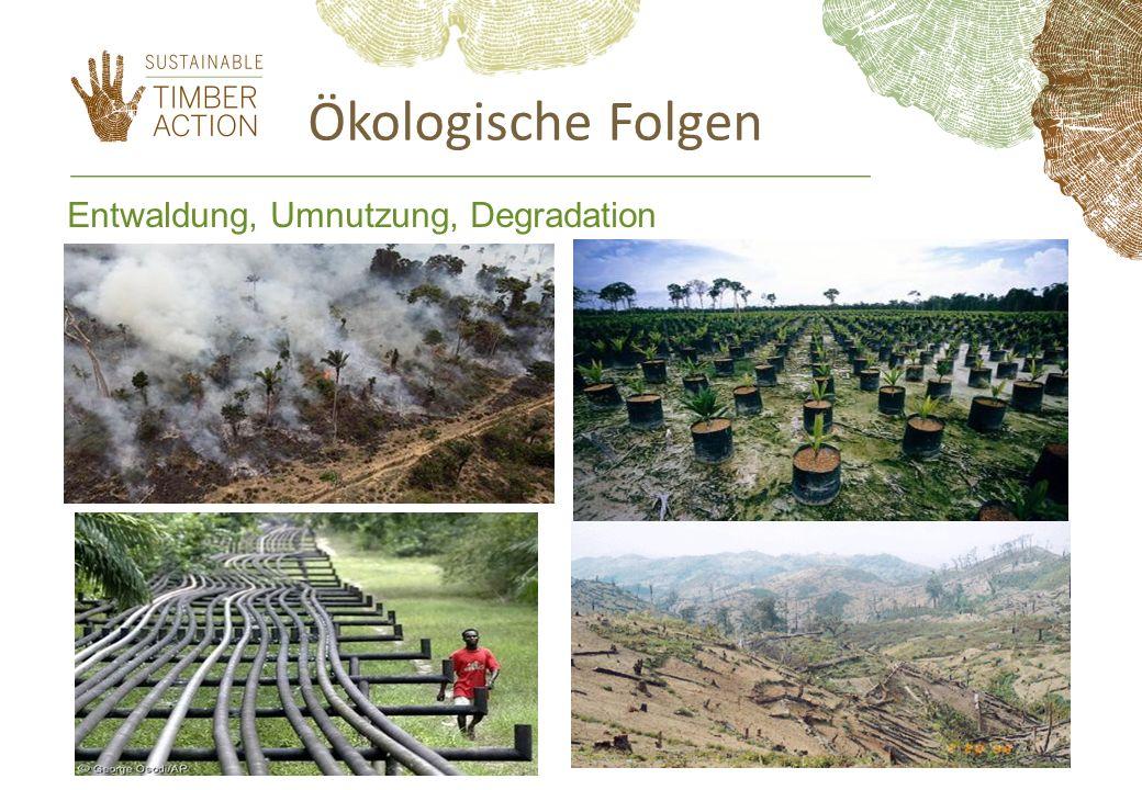 Entwaldung, Umnutzung, Degradation Ökologische Folgen