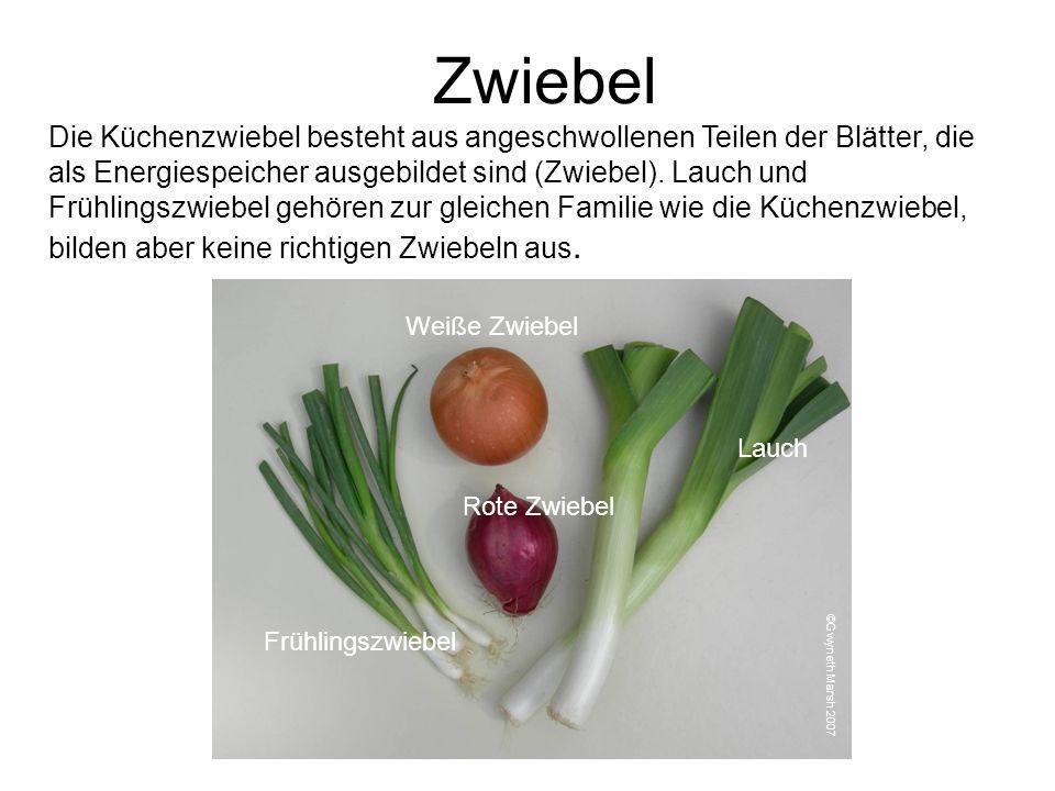 Zwiebel Die Küchenzwiebel besteht aus angeschwollenen Teilen der Blätter, die als Energiespeicher ausgebildet sind (Zwiebel). Lauch und Frühlingszwieb