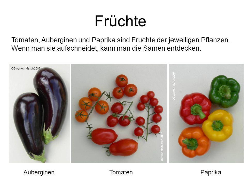 Früchte Tomaten, Auberginen und Paprika sind Früchte der jeweiligen Pflanzen. Wenn man sie aufschneidet, kann man die Samen entdecken. ©Gwyneth Marsh