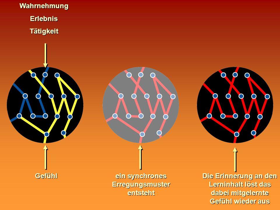 WahrnehmungErlebnisTätigkeitGefühl ein synchrones Erregungsmuster entsteht Die Erinnerung an den Lerninhalt löst das dabei mitgelernte Gefühl wieder a