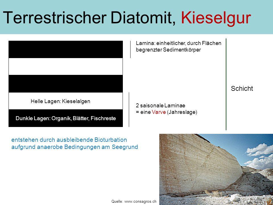 Terrestrischer Diatomit, Kieselgur entstehen durch ausbleibende Bioturbation aufgrund anaerobe Bedingungen am Seegrund 2 saisonale Laminae = eine Varv