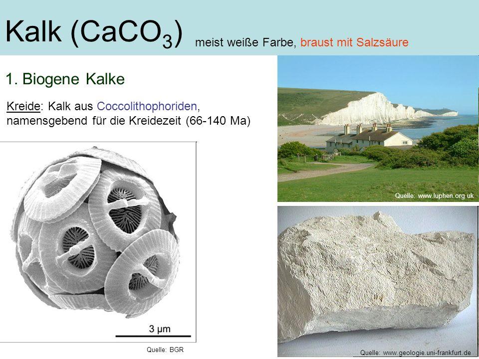 Kalk (CaCO 3 ) Kreide: Kalk aus Coccolithophoriden, namensgebend für die Kreidezeit (66-140 Ma) meist weiße Farbe, braust mit Salzsäure Quelle: www.lu