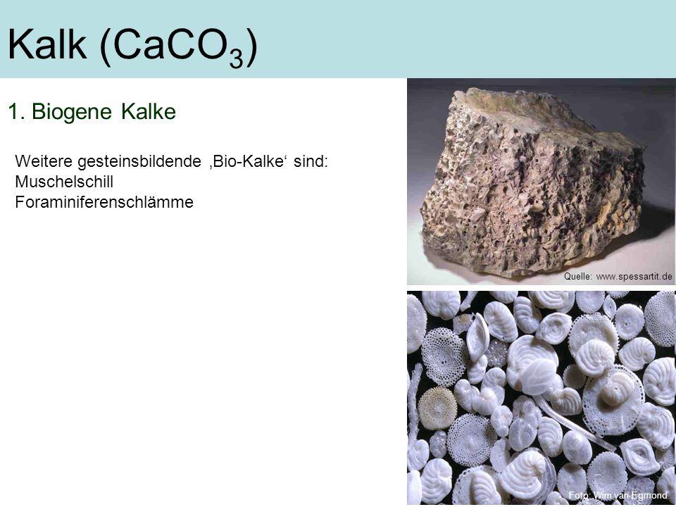 Kalk (CaCO 3 ) 1. Biogene Kalke Weitere gesteinsbildende Bio-Kalke sind: Muschelschill Foraminiferenschlämme Quelle: www.spessartit.de Foto: Wim van E