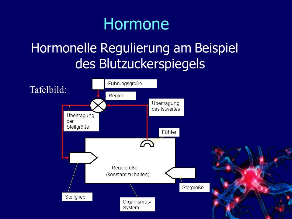 Hormone Hormonelle Regulierung am Beispiel des Blutzuckerspiegels Tafelbild: Übertragung der Stellgröße Übertragung des Istwertes (konstant zu halten) Organismus/ System Fühler Störgröße Führungsgröße Regler Stellglied Regelgröße