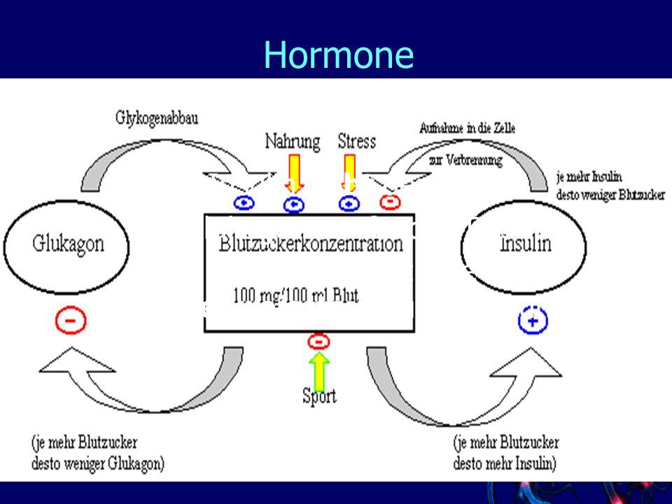 Hormone Wirkung von Insulin und Glukagon Insulin hebt den BZS Glukagon senkt den BZS Auch hier liegt eine Regelkreissteuerung zugrunde