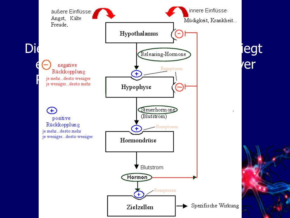 Hormone Die Ausschüttung der Hormone unterliegt einem Regelkreisschema mit negativer Rückkopplung: