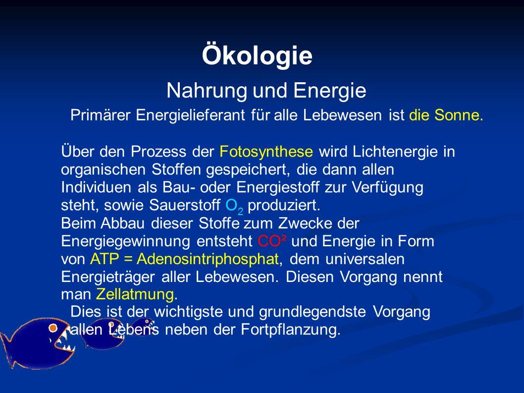 Ökologie Nahrung und Energie Primärer Energielieferant für alle Lebewesen ist die Sonne. Über den Prozess der Fotosynthese wird Lichtenergie in organi
