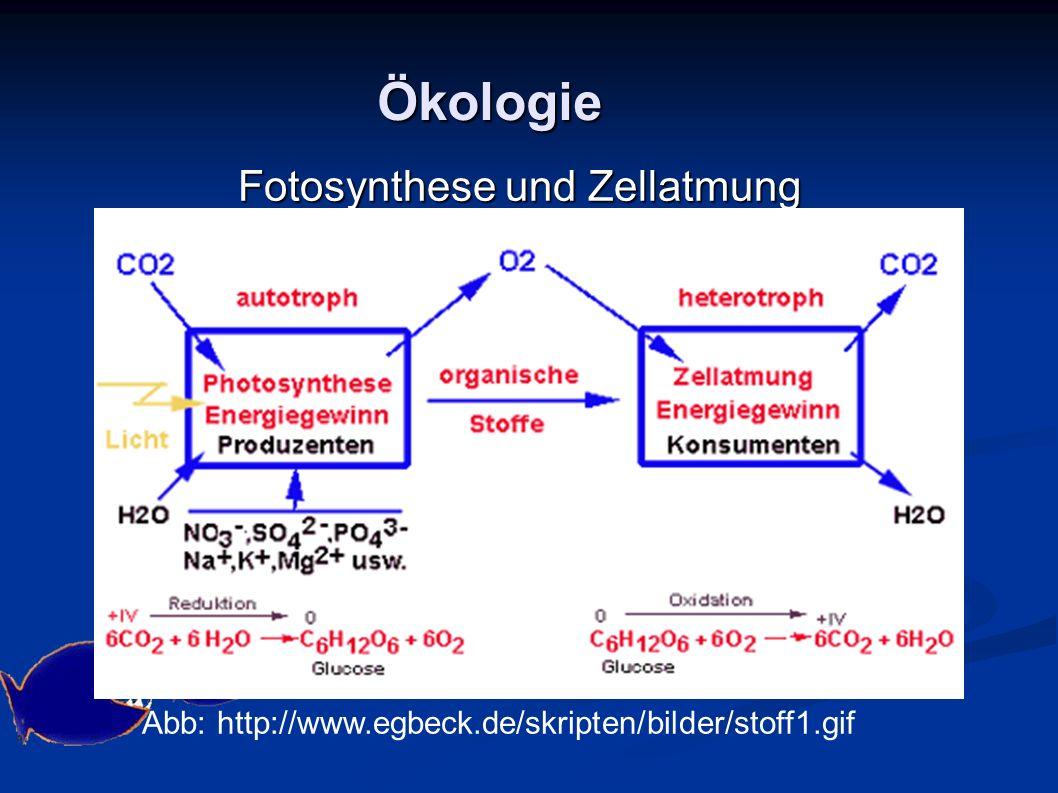 Ökologie Fotosynthese und Zellatmung Grafik: Judith Panzenböck: http://193.171.252.18/www.kidsweb.at/sonnenweb/Pflanze/fotosynthese.gif