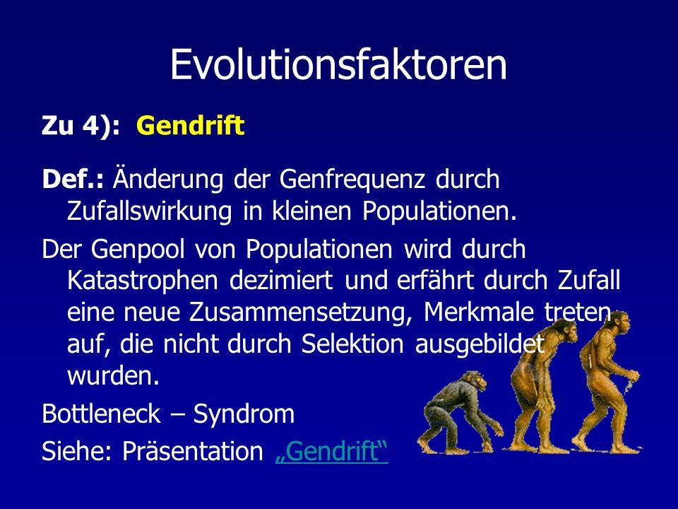 Evolutionsfaktoren Def.: Änderung der Genfrequenz durch Zufallswirkung in kleinen Populationen. Der Genpool von Populationen wird durch Katastrophen d