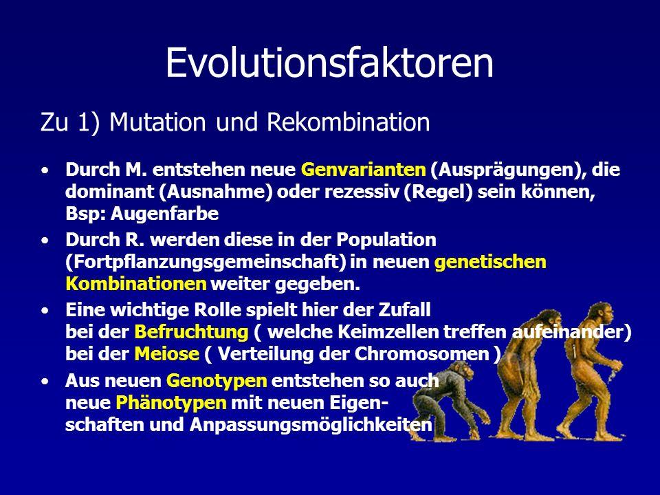 Evolutionsfaktoren Durch M. entstehen neue Genvarianten (Ausprägungen), die dominant (Ausnahme) oder rezessiv (Regel) sein können, Bsp: Augenfarbe Dur