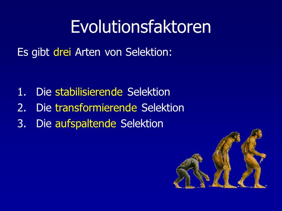 Evolutionsfaktoren 1.Die stabilisierende Selektion 2.Die transformierende Selektion 3.Die aufspaltende Selektion Es gibt drei Arten von Selektion: