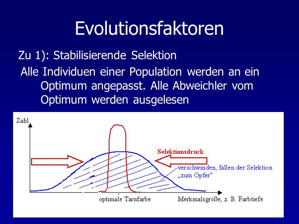 Evolutionsfaktoren Alle Individuen einer Population werden an ein Optimum angepasst. Alle Abweichler vom Optimum werden ausgelesen Zu 1): Stabilisiere