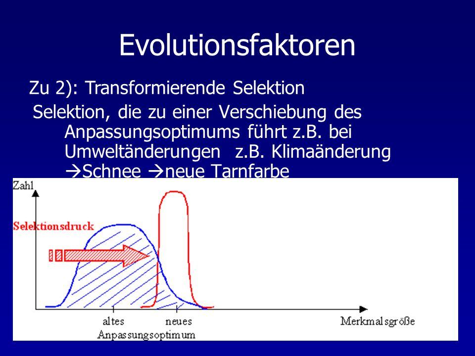 Evolutionsfaktoren Selektion, die zu einer Verschiebung des Anpassungsoptimums führt z.B. bei Umweltänderungen z.B. Klimaänderung Schnee neue Tarnfarb