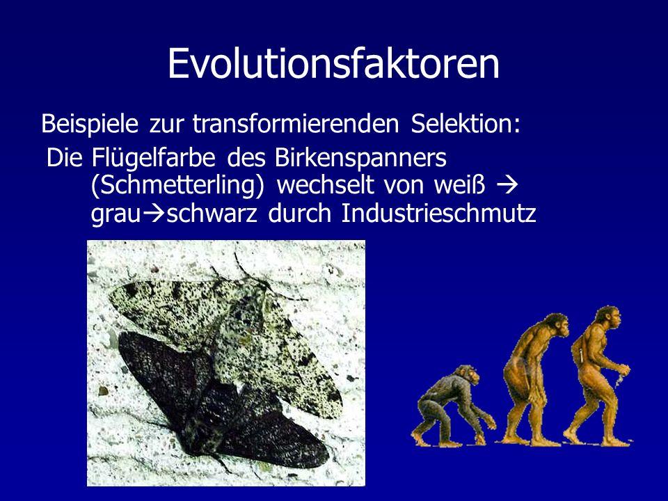 Evolutionsfaktoren Die Flügelfarbe des Birkenspanners (Schmetterling) wechselt von weiß grau schwarz durch Industrieschmutz Beispiele zur transformierenden Selektion: