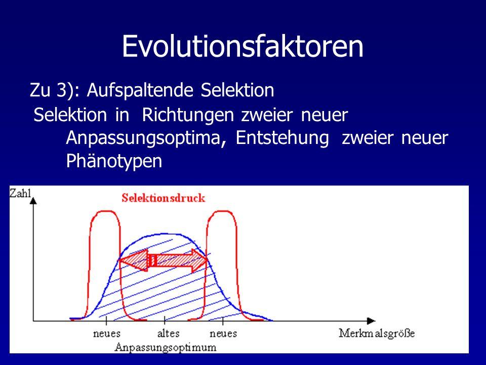 Evolutionsfaktoren Selektion in Richtungen zweier neuer Anpassungsoptima, Entstehung zweier neuer Phänotypen Zu 3): Aufspaltende Selektion