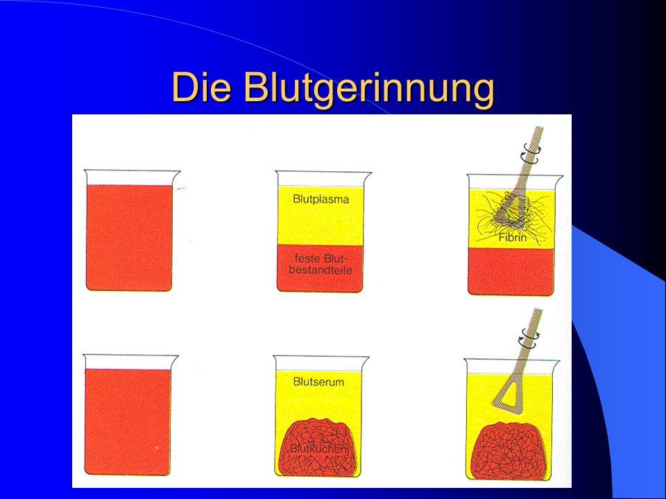 Blutgruppen Serum BK AB0AB A B 0 -- xxxx -- xx --xx -- -- ---- -- xx xxxx --