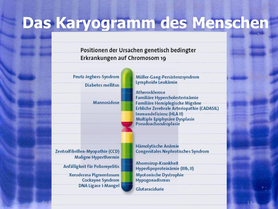1401.08.2005, © Peer Millauer Das Karyogramm des Menschen