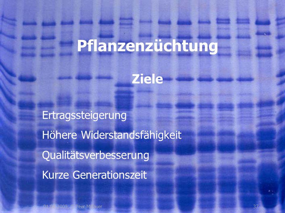3701.08.2005, © Peer Millauer Ziele Pflanzenzüchtung Ertragssteigerung Höhere Widerstandsfähigkeit Qualitätsverbesserung Kurze Generationszeit
