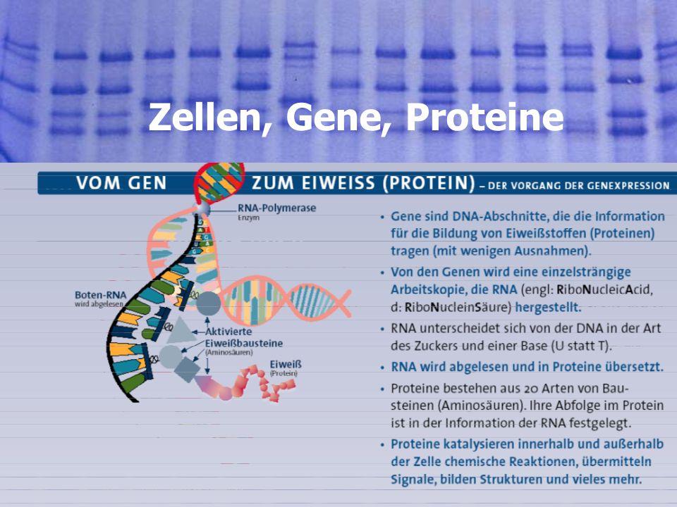 3501.08.2005, © Peer Millauer Risiken Xenotransplantation Ungewolltes Einschleusen von tierischen Krankheitserregern, z.B.