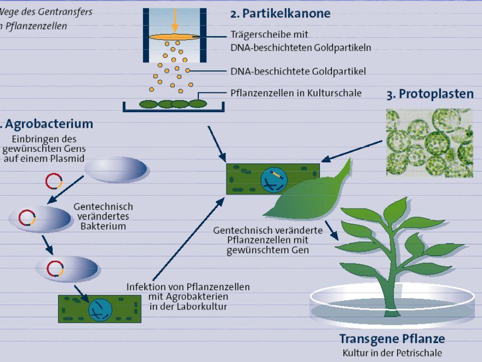 4101.08.2005, © Peer Millauer Biotechnologische Methoden in der Pflanzenzüchtung