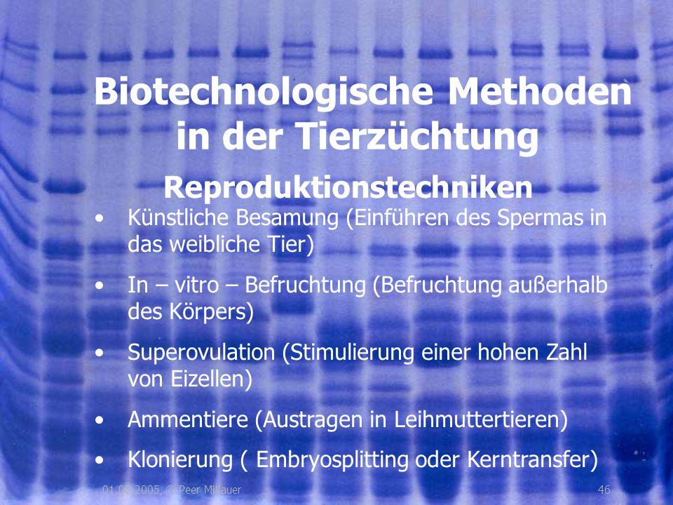 4601.08.2005, © Peer Millauer Reproduktionstechniken Biotechnologische Methoden in der Tierzüchtung Künstliche Besamung (Einführen des Spermas in das