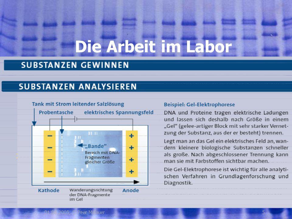 501.08.2005, © Peer Millauer Die Arbeit im Labor