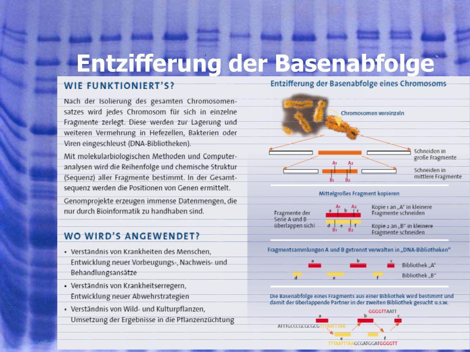 901.08.2005, © Peer Millauer Gendiagnostik Genetisch bedingte Krankheitsursachen vor oder nach der Geburt erkennen Genetische Merkmale in Verbindung mit individuellen Reaktionen auf Medikamente nachweisen Individuen aufgrund genetischer Merkmale identifizieren ( z.B.