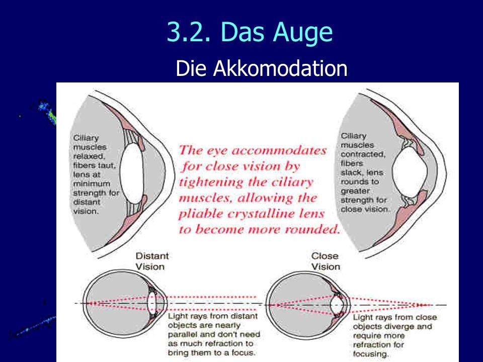 3.2. Das Auge Die Akkomodation