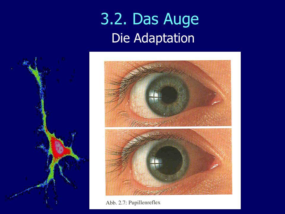 3.2. Das Auge Die Adaptation