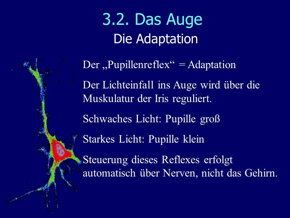 3.2. Das Auge Die Adaptation Der Pupillenreflex = Adaptation Der Lichteinfall ins Auge wird über die Muskulatur der Iris reguliert. Schwaches Licht: P