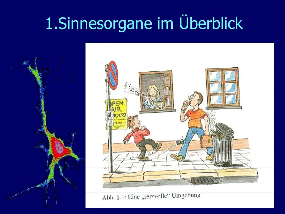 1.Sinnesorgane im Überblick
