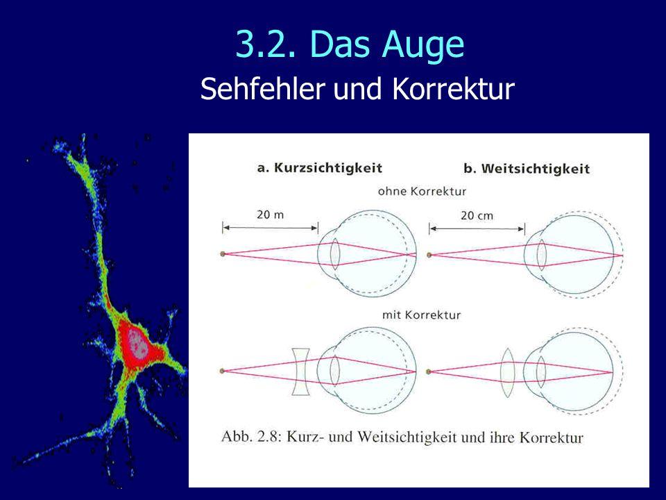 3.2. Das Auge Sehfehler und Korrektur