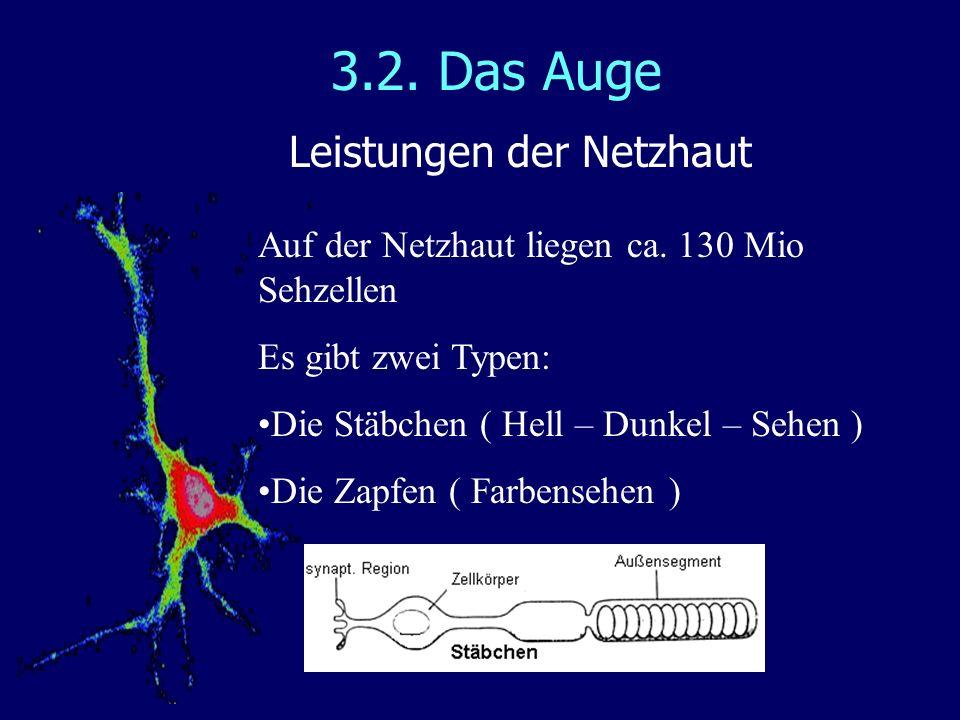 3.2. Das Auge Leistungen der Netzhaut Auf der Netzhaut liegen ca. 130 Mio Sehzellen Es gibt zwei Typen: Die Stäbchen ( Hell – Dunkel – Sehen ) Die Zap
