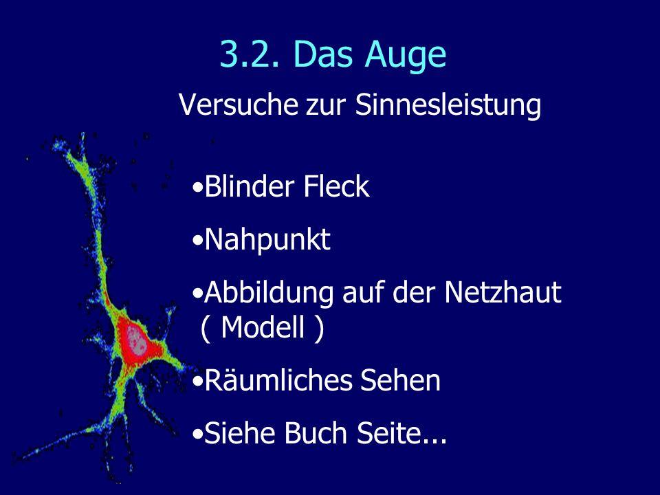 3.2. Das Auge Versuche zur Sinnesleistung Blinder Fleck Nahpunkt Abbildung auf der Netzhaut ( Modell ) Räumliches Sehen Siehe Buch Seite...