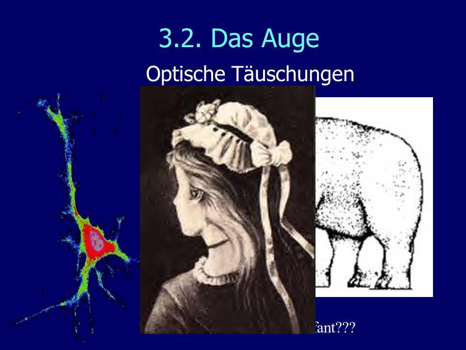 3.2. Das Auge Optische Täuschungen Wie viel Beine hat der Elefant??? Alte oder junge Frau???