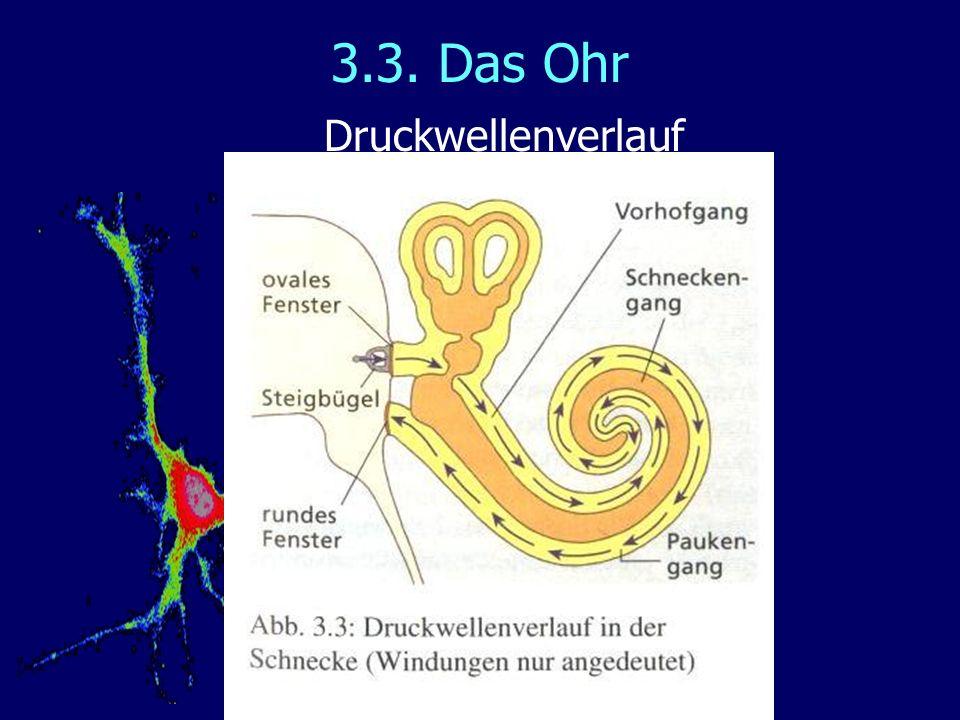 3.3. Das Ohr Druckwellenverlauf