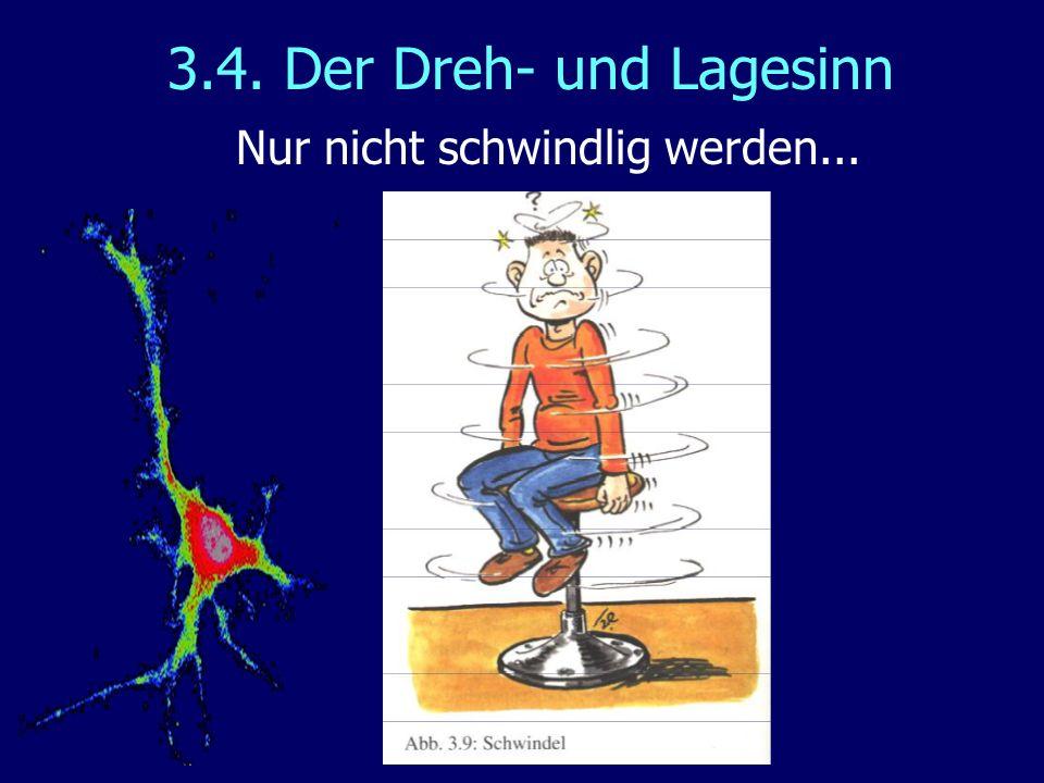 3.4. Der Dreh- und Lagesinn Nur nicht schwindlig werden...