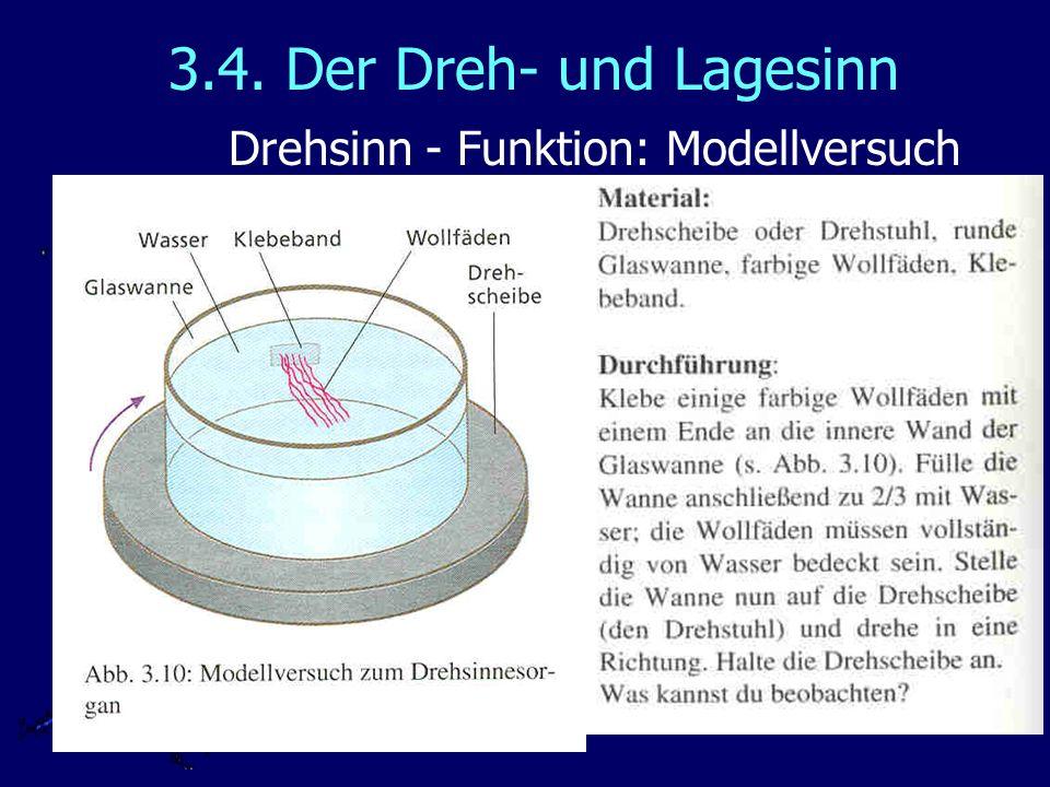 3.4. Der Dreh- und Lagesinn Drehsinn - Funktion: Modellversuch