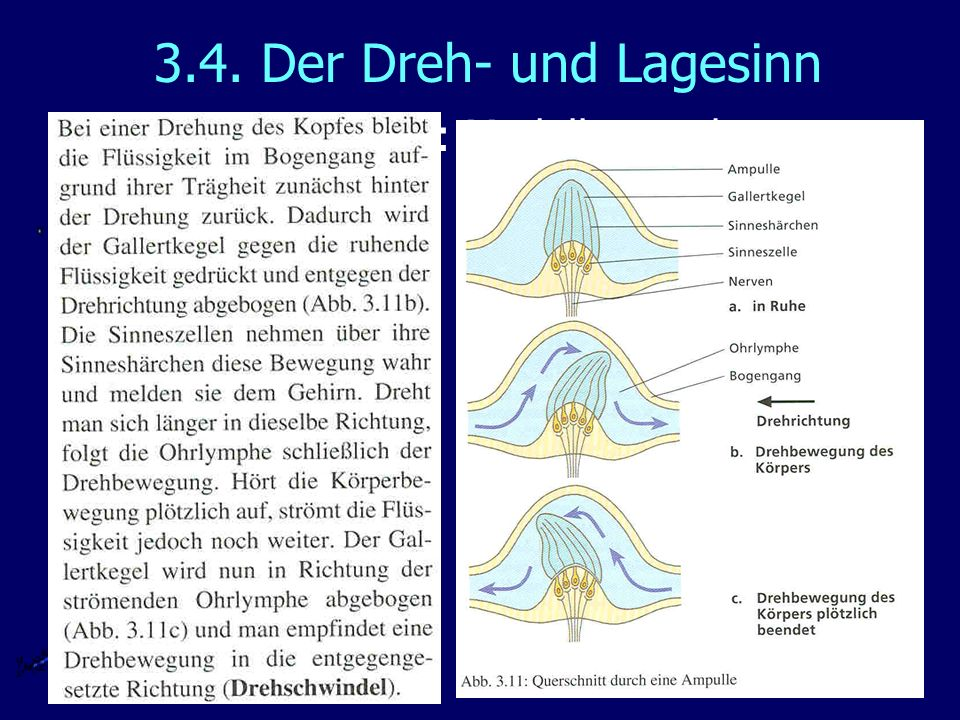 3.4. Der Dreh- und Lagesinn Funktion: Modellversuch