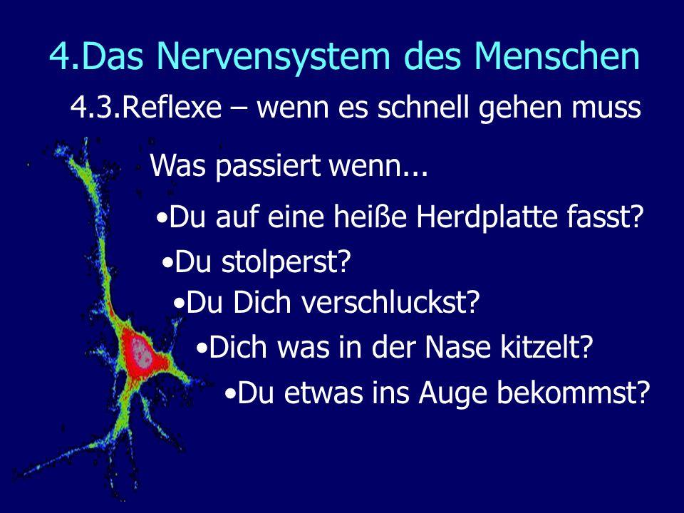 4.Das Nervensystem des Menschen 4.3.Reflexe – wenn es schnell gehen muss Was passiert wenn... Du etwas ins Auge bekommst? Dich was in der Nase kitzelt
