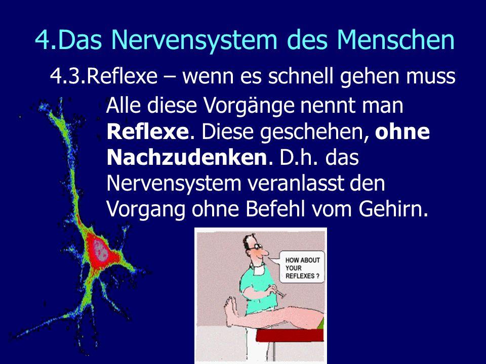 4.Das Nervensystem des Menschen 4.3.Reflexe – wenn es schnell gehen muss Alle diese Vorgänge nennt man Reflexe. Diese geschehen, ohne Nachzudenken. D.