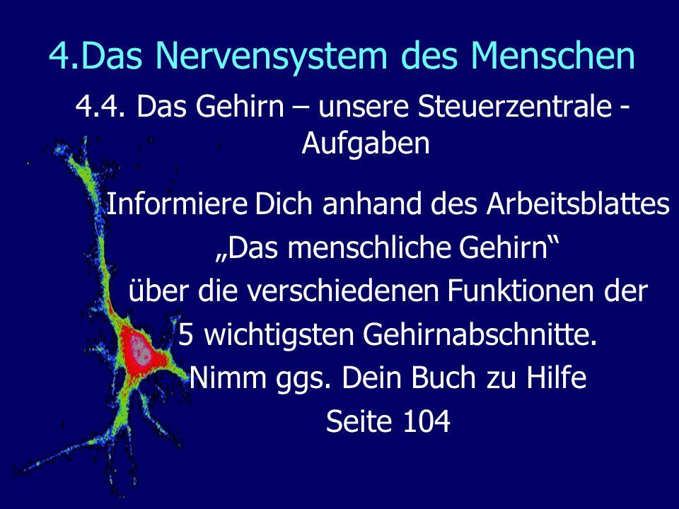 4.Das Nervensystem des Menschen 4.4. Das Gehirn – unsere Steuerzentrale - Aufgaben Informiere Dich anhand des Arbeitsblattes Das menschliche Gehirn üb